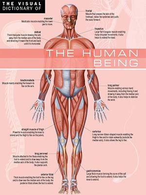 82 - The Visual Dictionary of The Human Beings-index